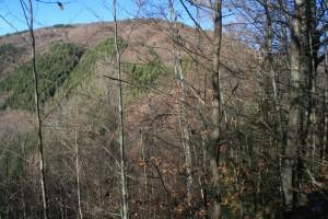 Versantul pe care se află așezarea de pe Comărnicelul Cetei, văzut de pe platoul cetății